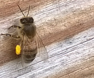 Image missing - members on an apiary visit
